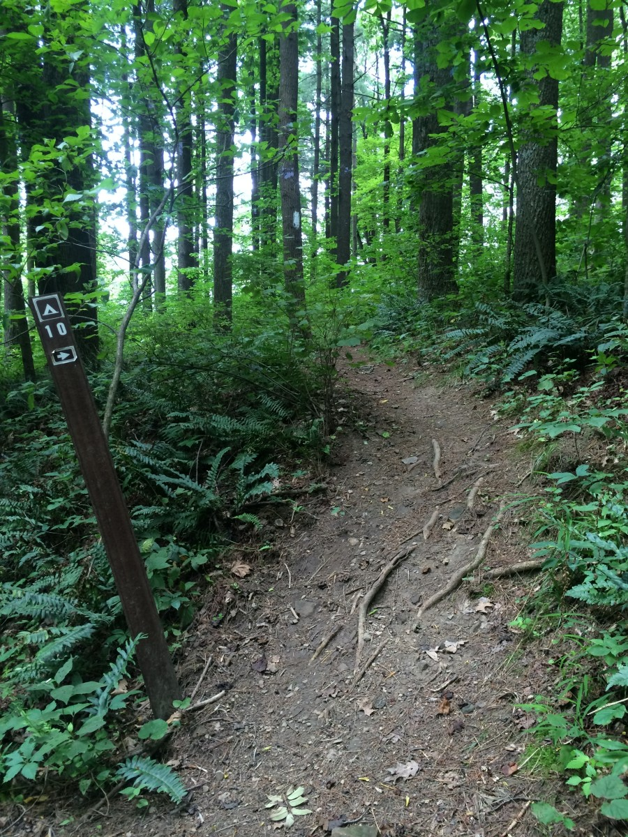 Path up to Site 10, view from trail