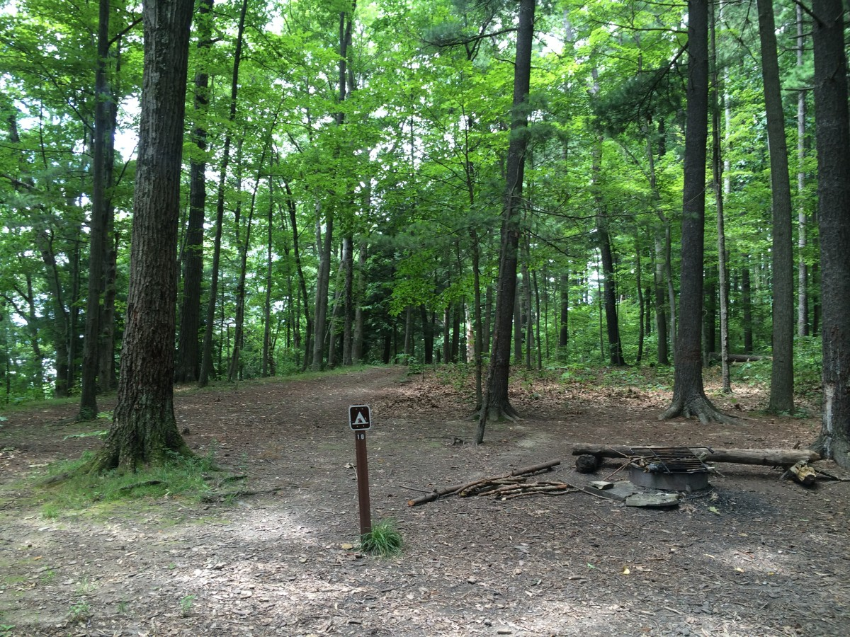 Site 10, view of clearing