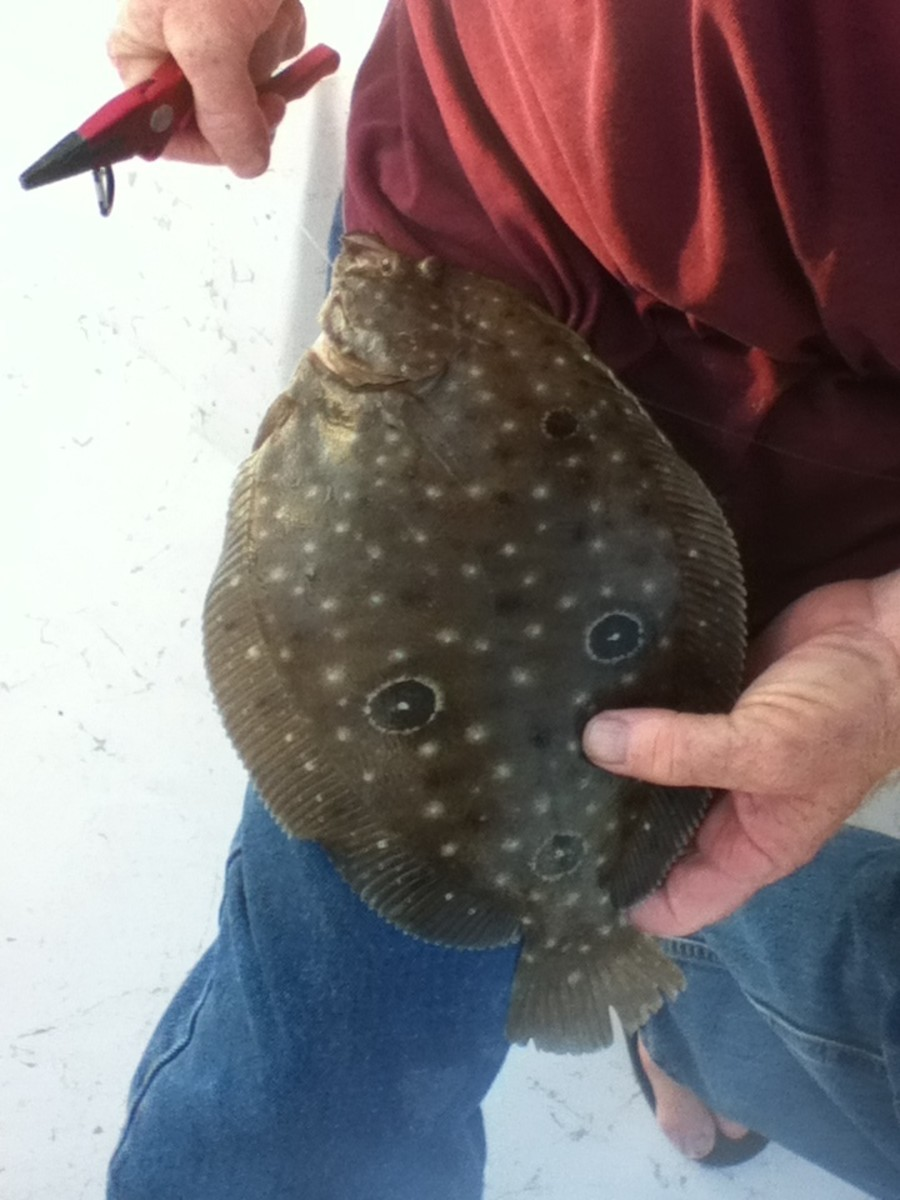 A Gulf flounder. Note the prominent eye spots.
