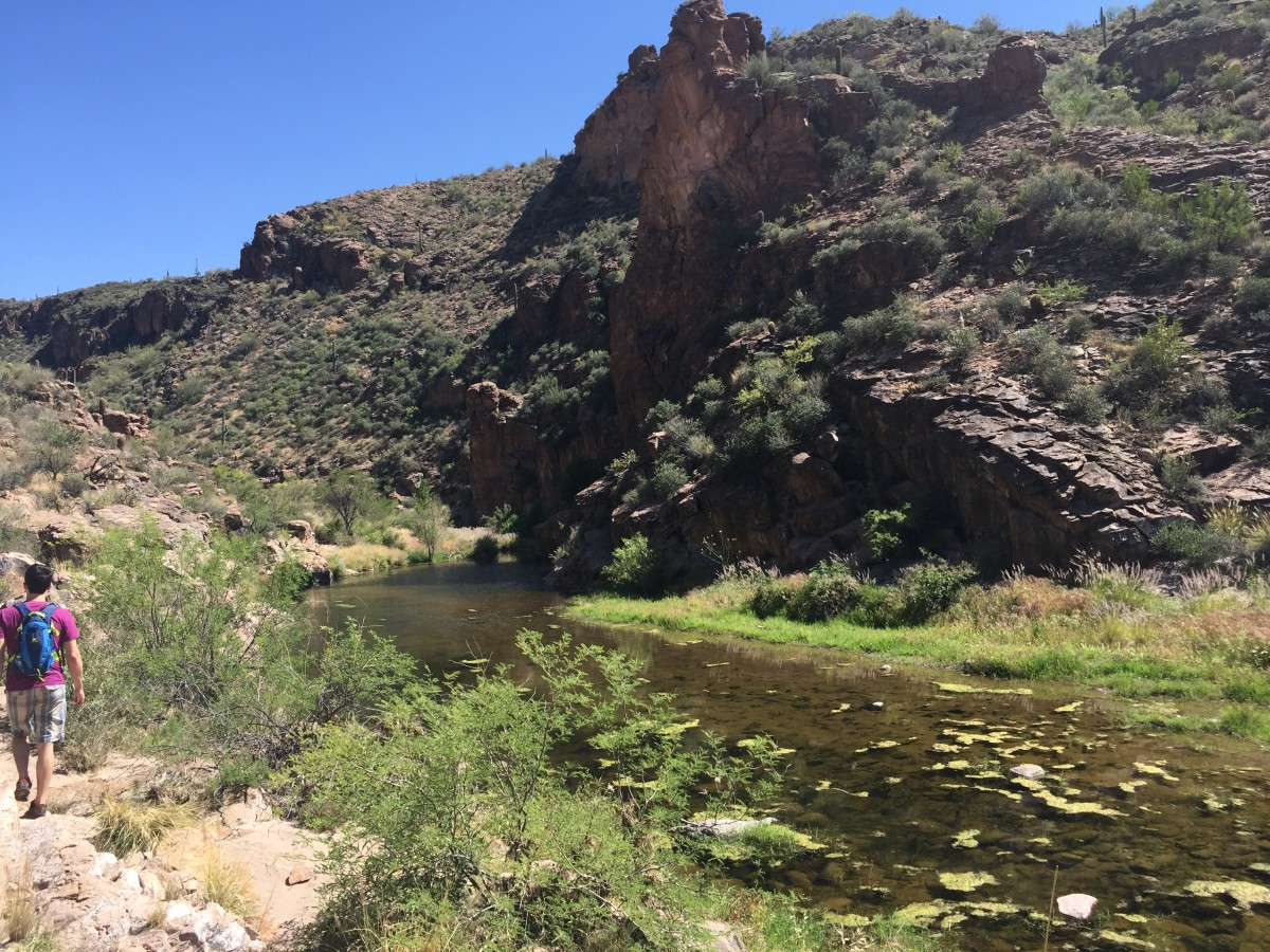 Shallow waters of First Water Creek in Canyon above where it flows into Canyon Lake in Arizona