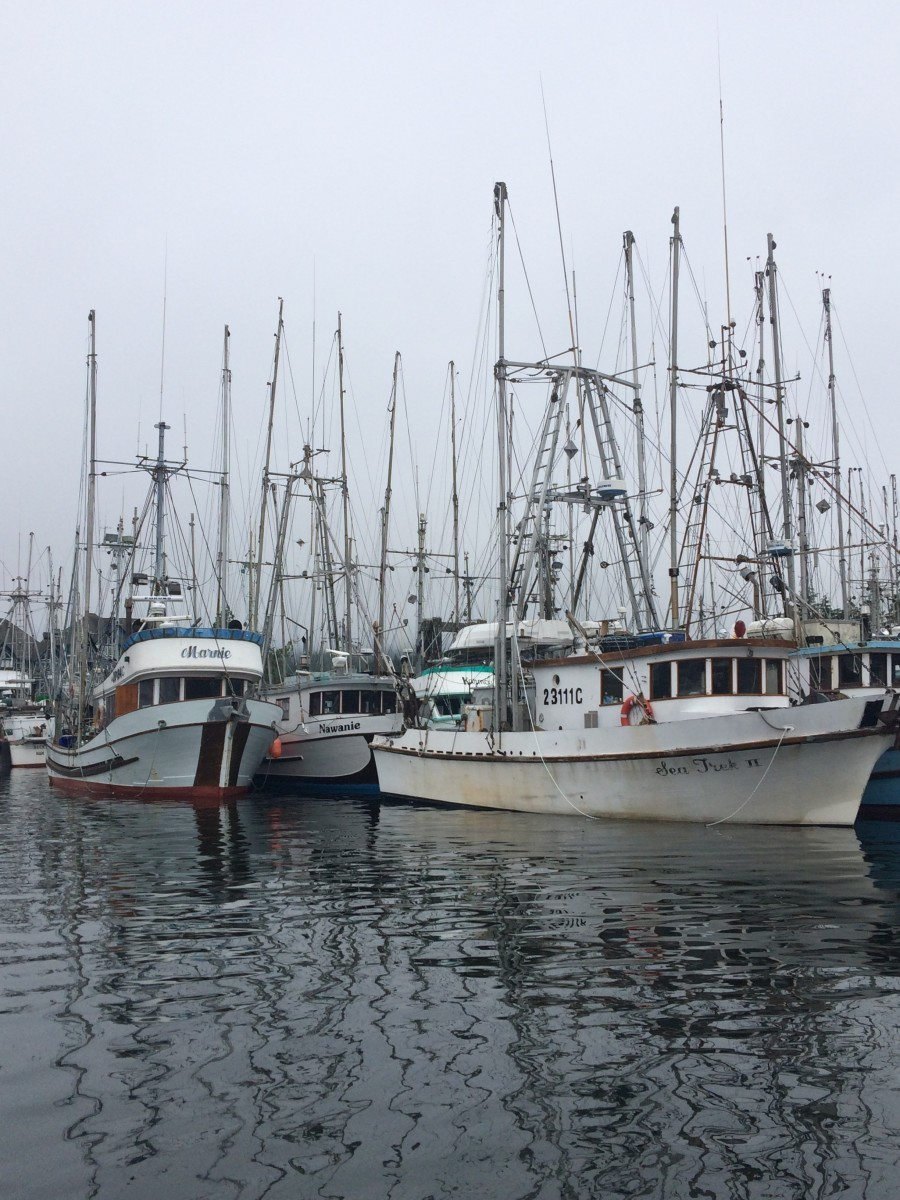 Plenty of Boats are in the Ucluelet Marina.