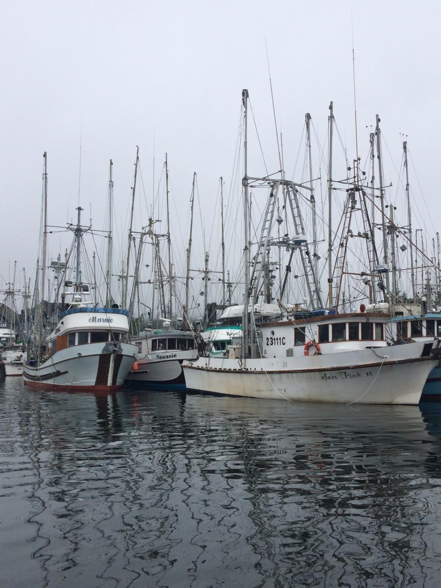 Plenty of Boats are in the Ucluelet Marina.