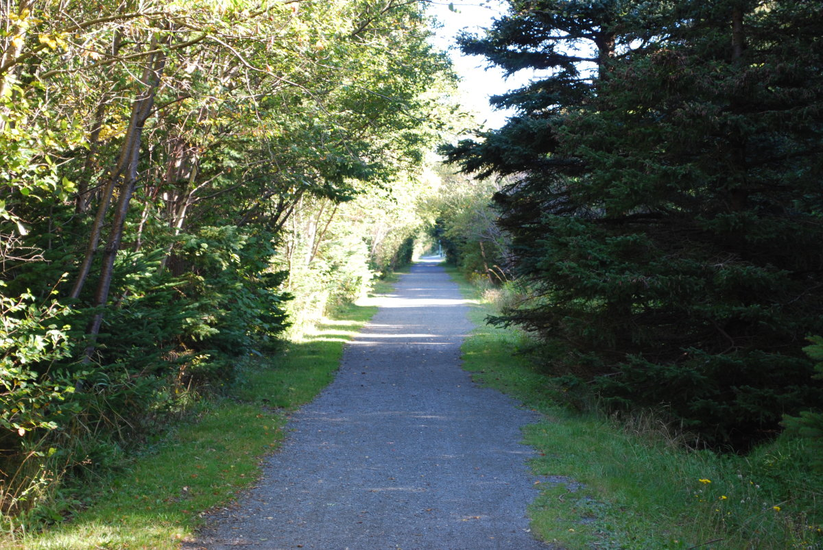 Section of tree lined trail between Waterford Lane and Whelan's Lane.
