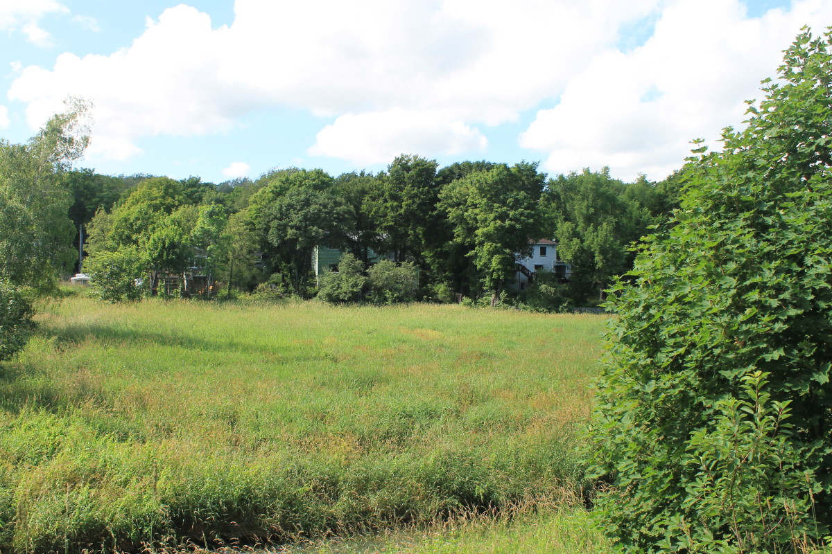 Looking across at the houses and tree lined gardens of Waterford Bridge Road.