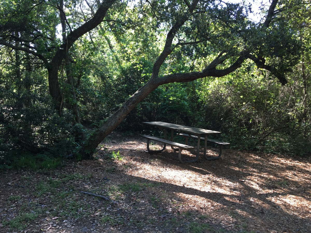 I loved that this site had the picnic table under the tree!
