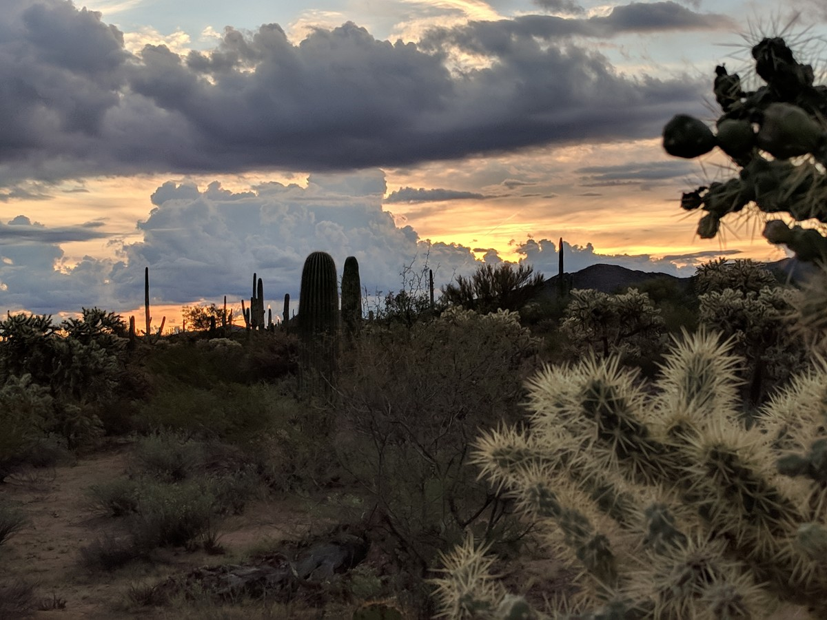 Making our way through the abundant verities of Cacti and other Succulents