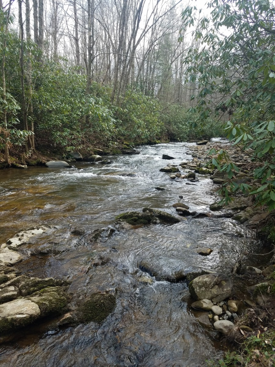 Stream inside Roan Mountain State Park.