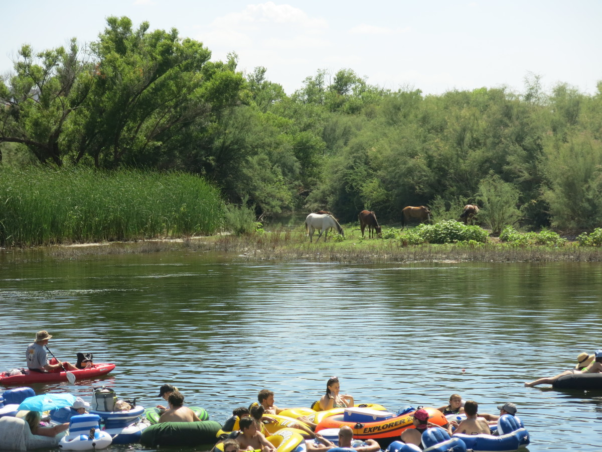 People floating on river with wild horses on shore.