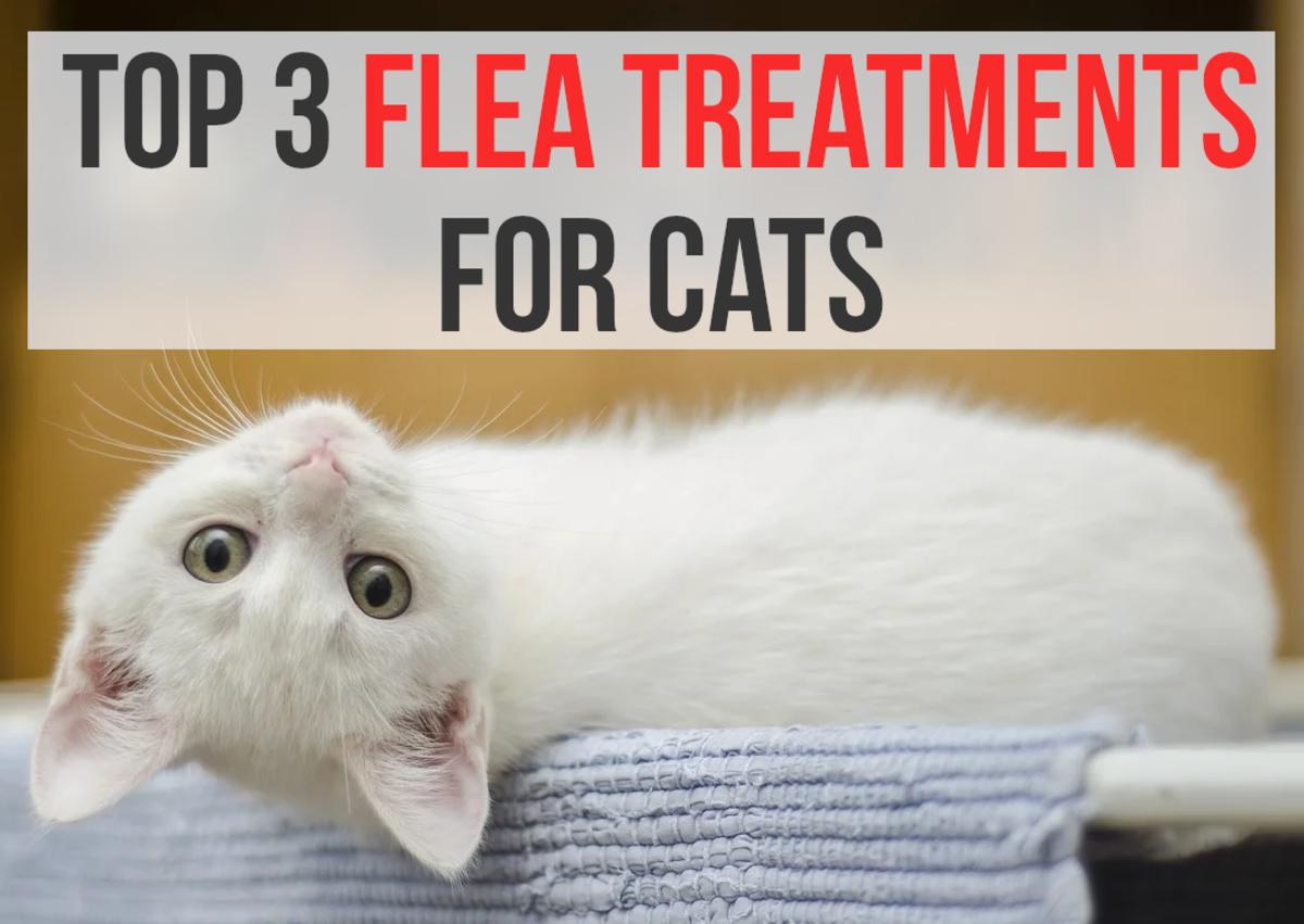 3 Best Flea Treatments for Pet Cats