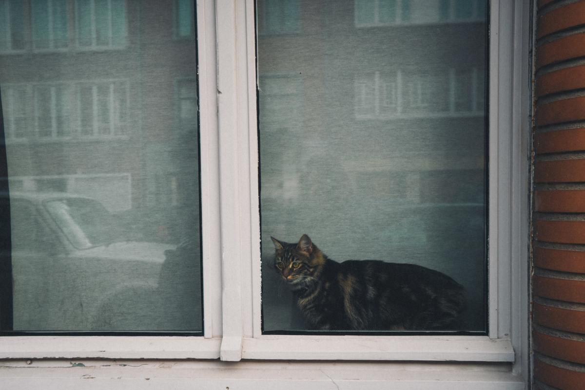 Your cat might be bothered by wildlife or neighborhood cats outside.