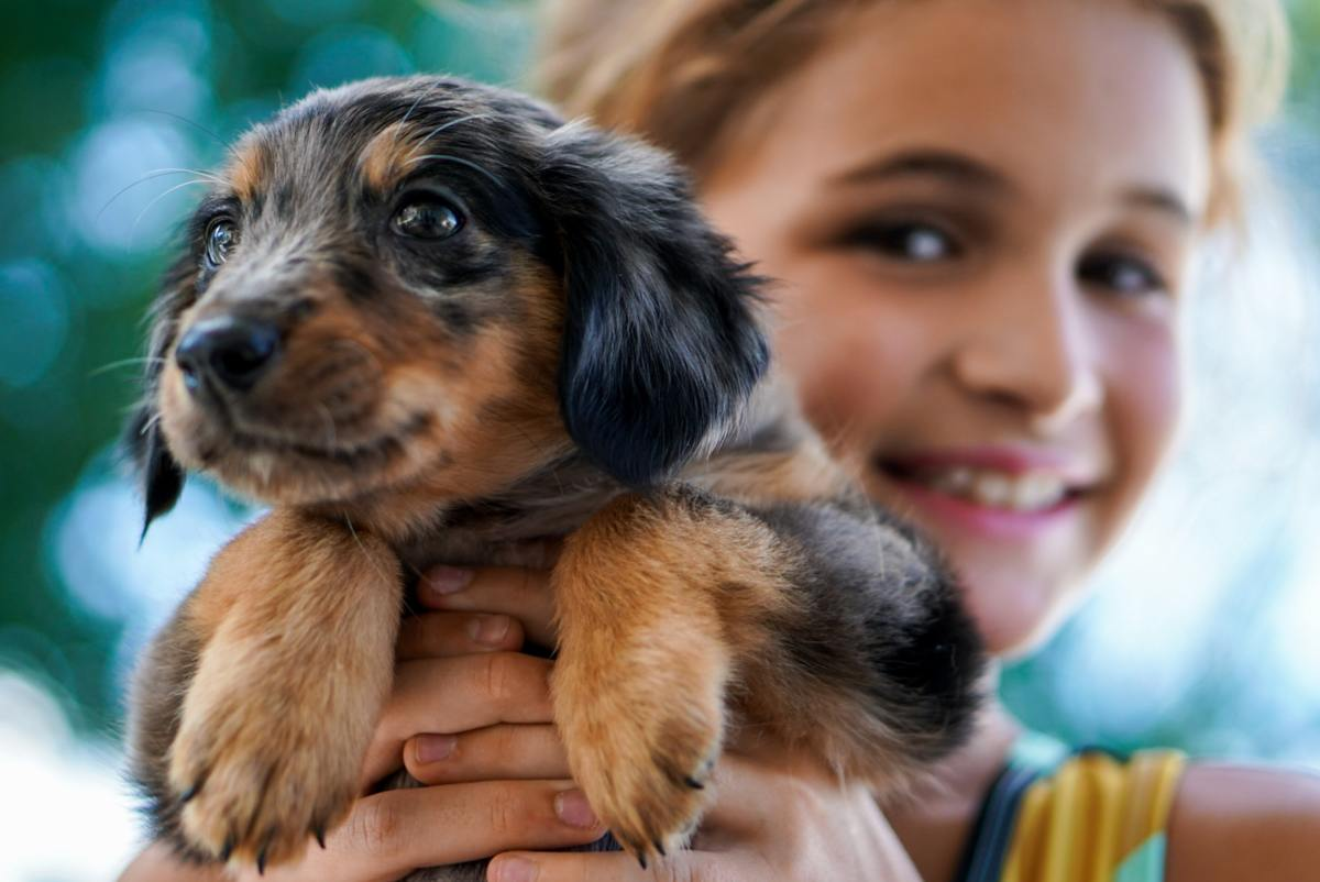 The 10 Best Dog Breeds For Kids Pethelpful By Fellow Animal Lovers And Experts
