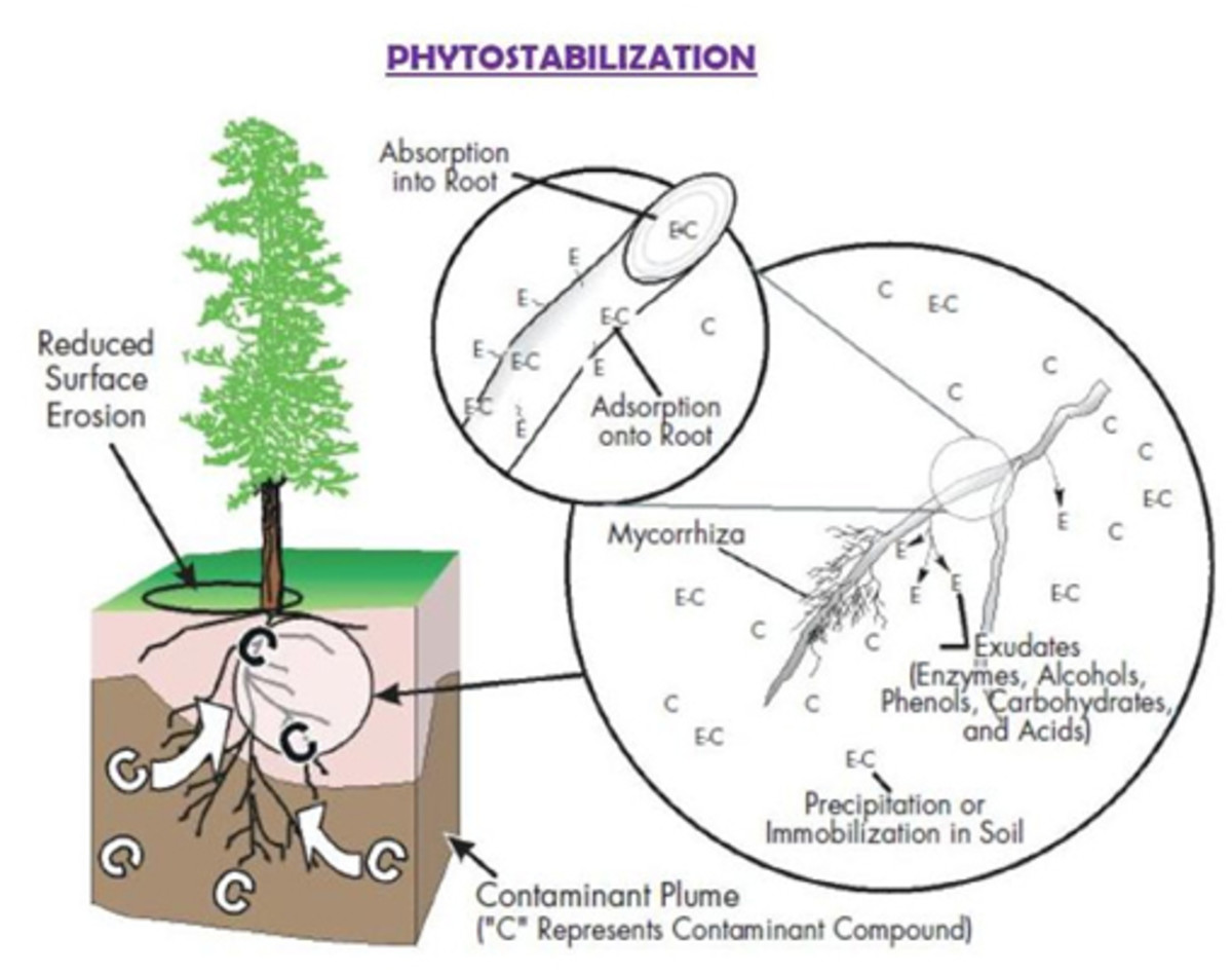 phytoremediation-a-natural-cleaning-process