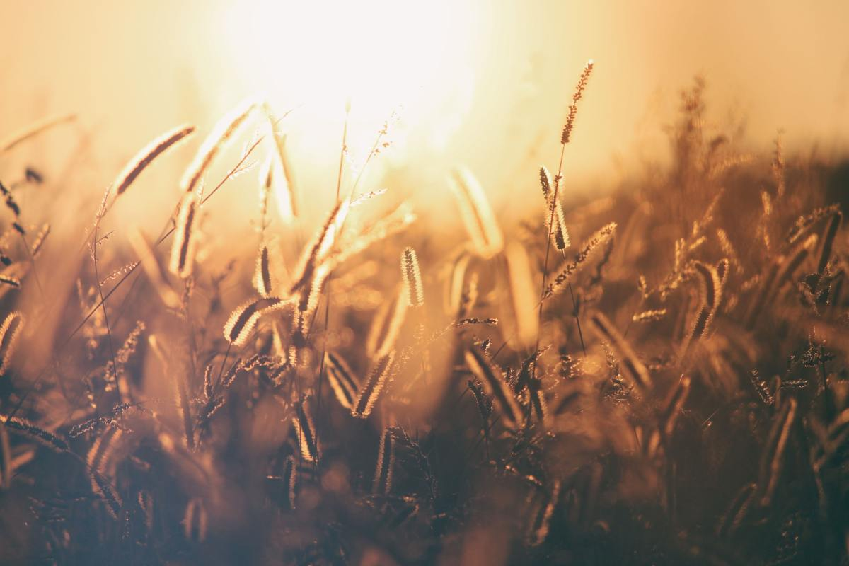 Lughnasadh is the harvest of the grains.