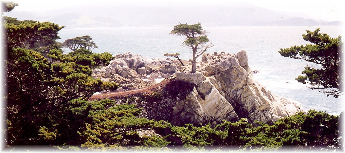 The Lone Cypress - 17 Mile Drive in California