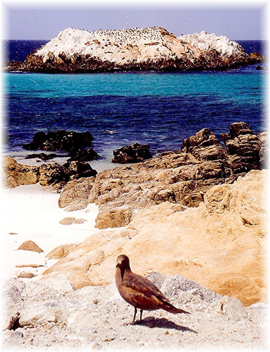 The rock in the background is called Bird Rock but also provides a haven for sea lions and harbor seals.