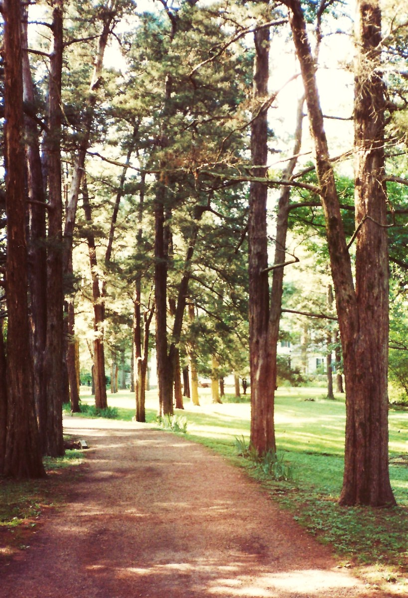 Magnificent grounds at Rowan Oak
