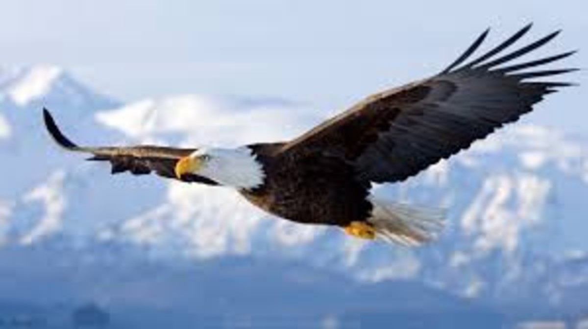 Six Fascinating Lessons From The Eagle