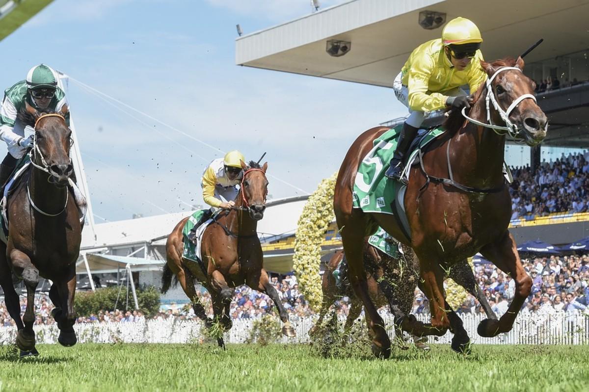 Mistreatment of Race Horses