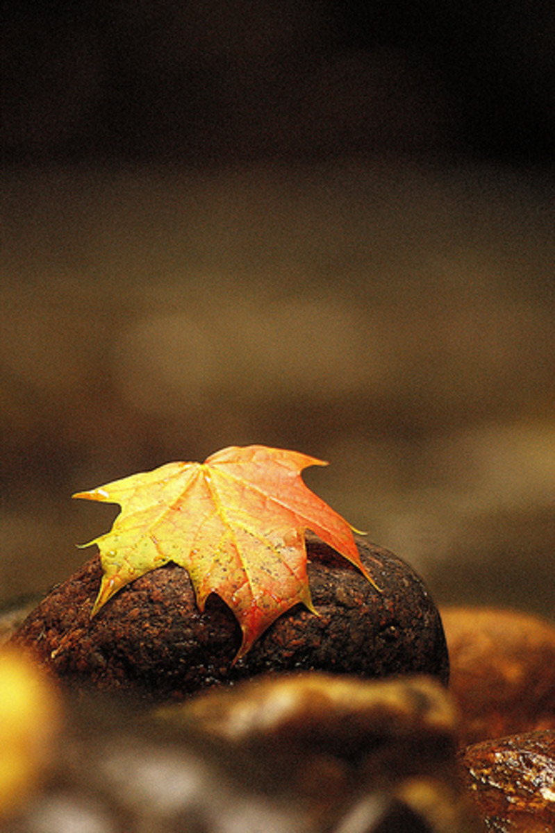 a paper showing the mysterious of nature. A dead leaf but a piece of a paper makes it eternal.