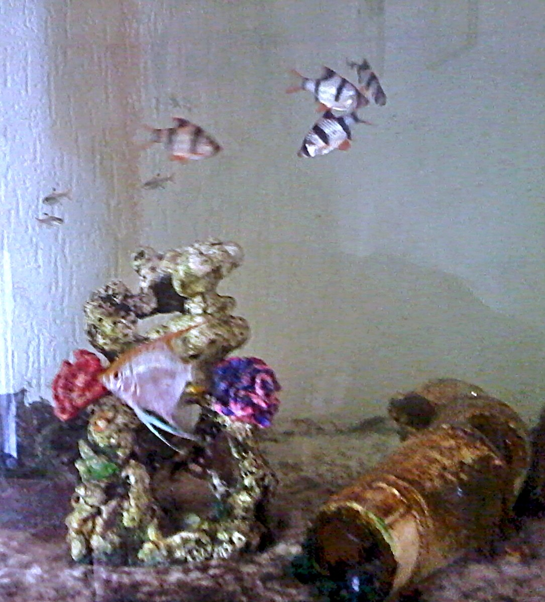 Some of my tropical fish today - my love of fish started as a child, when I won goldfish at the funfair.