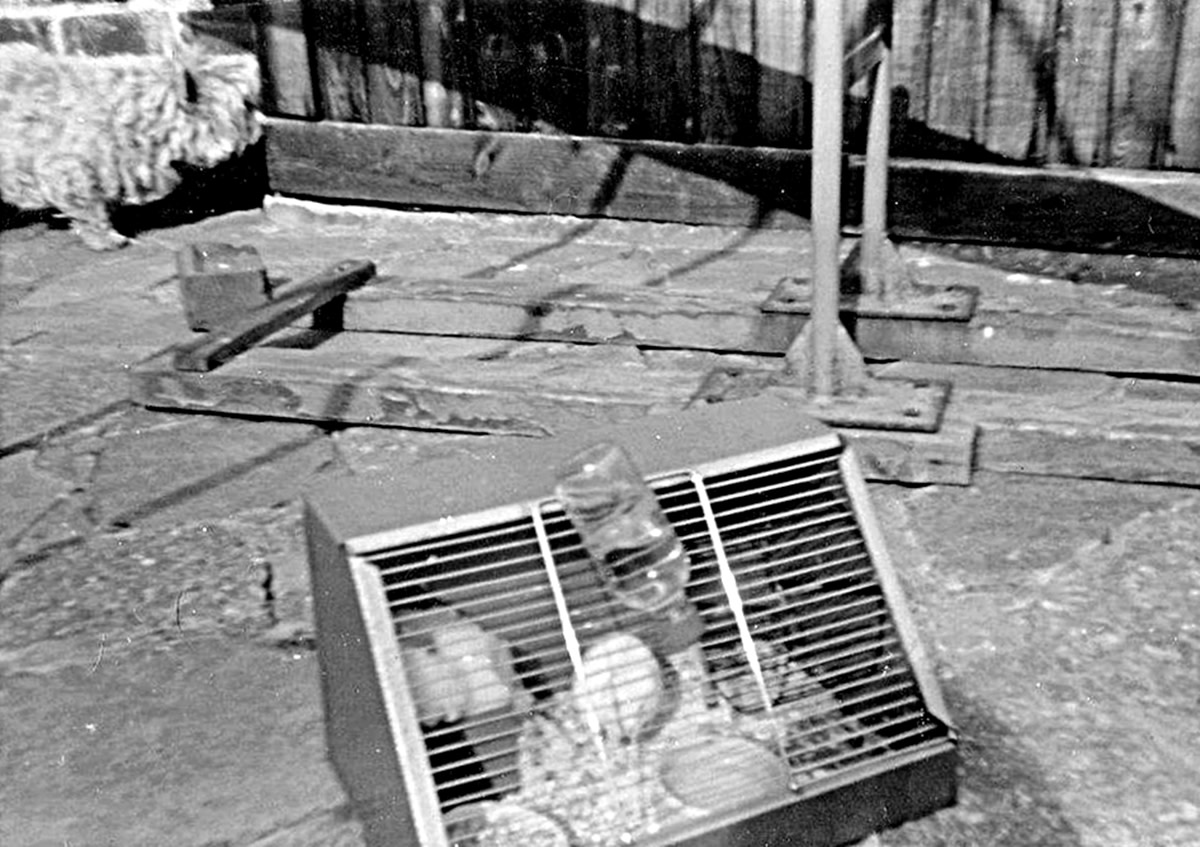 My dog Mitzie and hamster Snowy enjoying the summer sunshine on our patio in the back garden in the 1970s.