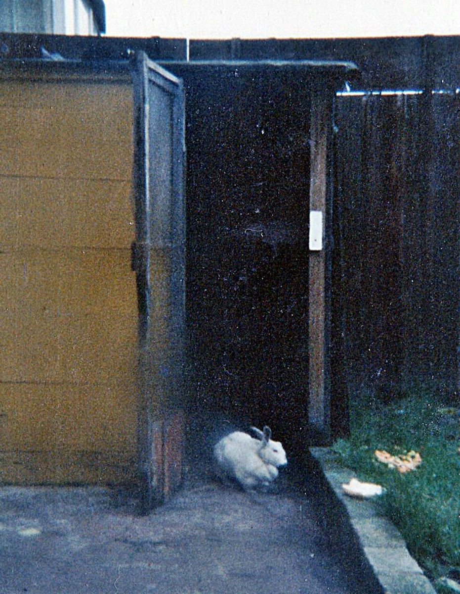 My rabbit Snowball in the doorway of his spectacular and massive hutch and run, which my dad had made especially.