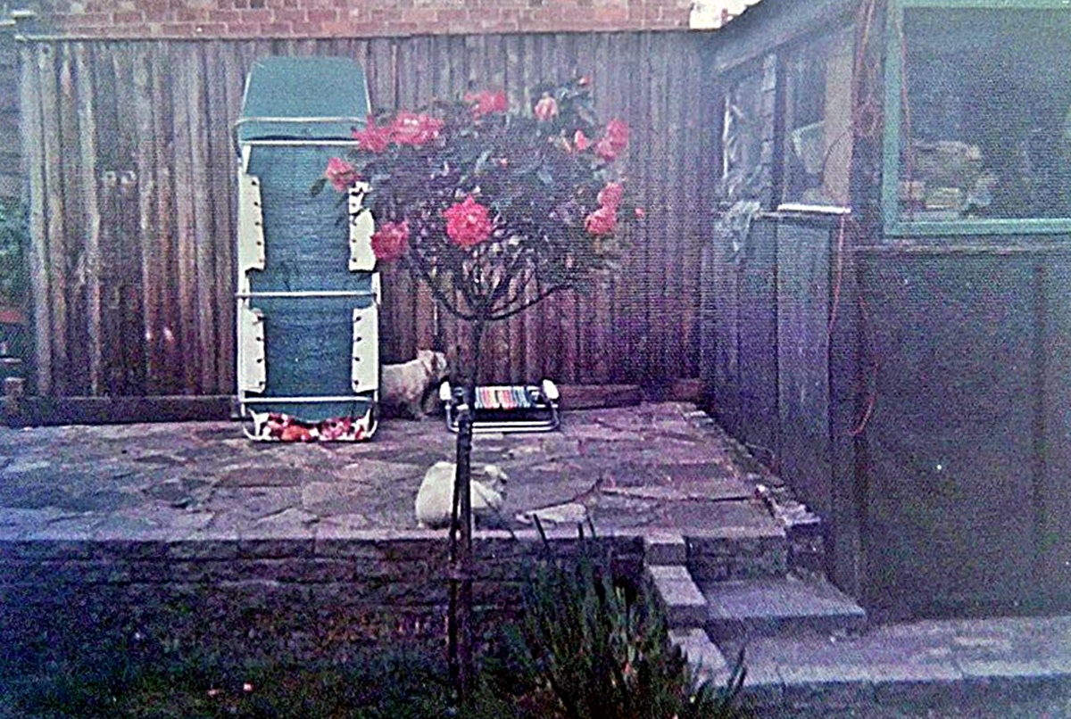 Pictured in the back garden, Mitzie and Snowball are next to the shed (on the right) under which Snowball had dug his way out.