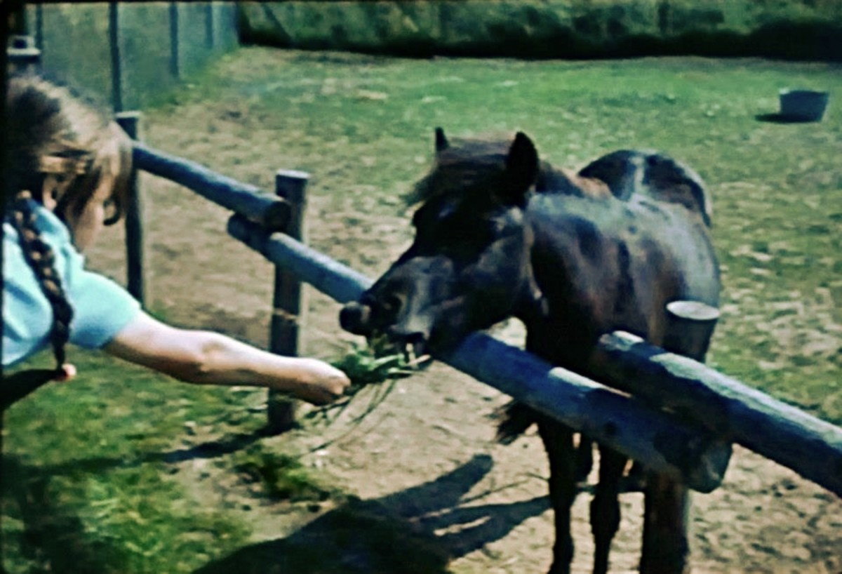 Feeding a pony when I was a youngster in the 1970s.