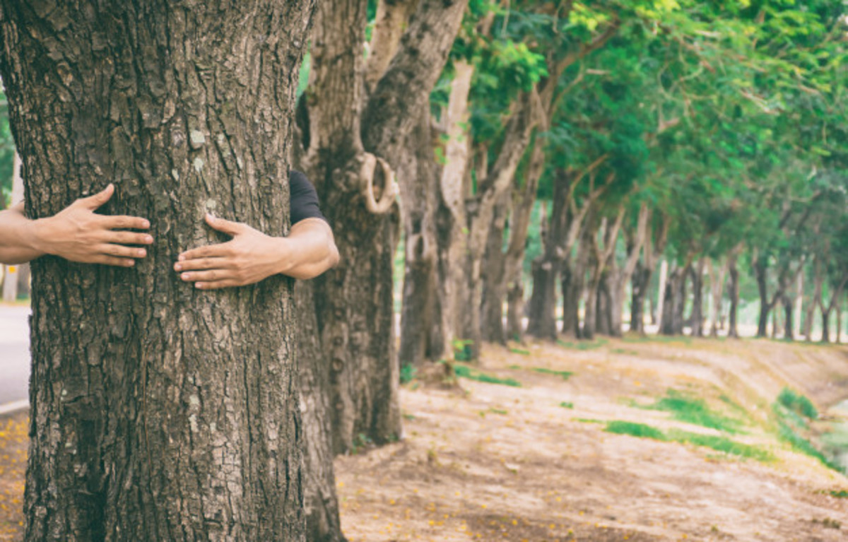 Hugging an old tree gives relief to our soul. We can recover from our sorrows.