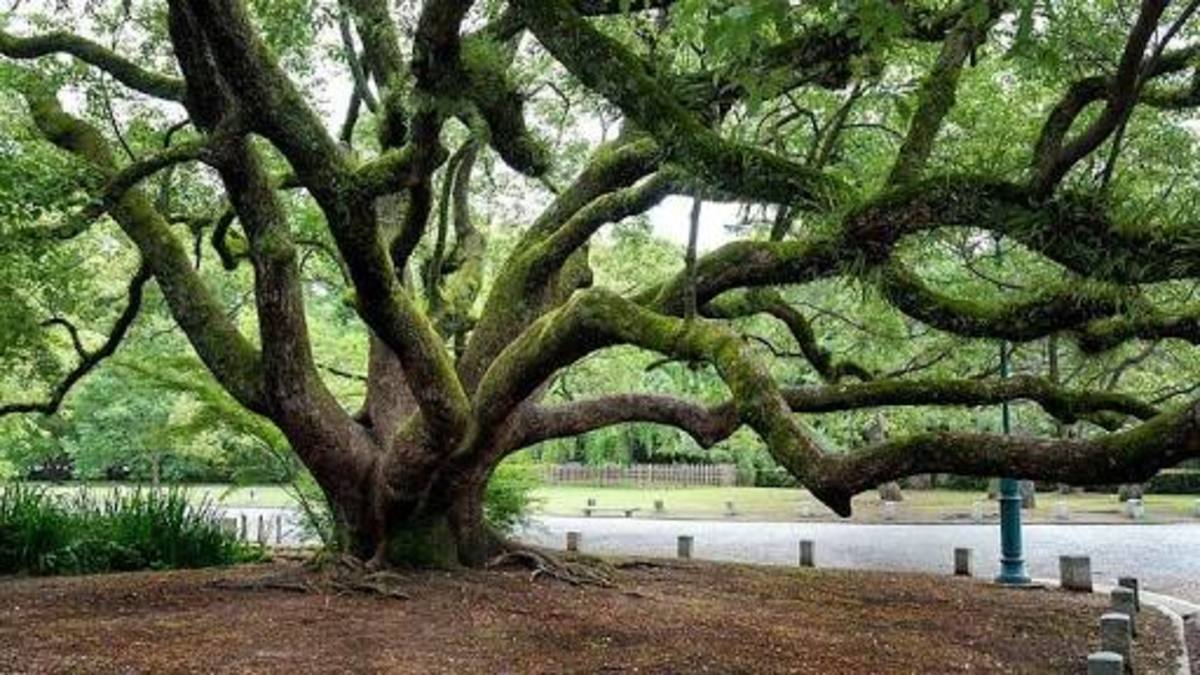 Trees are our ancestors.