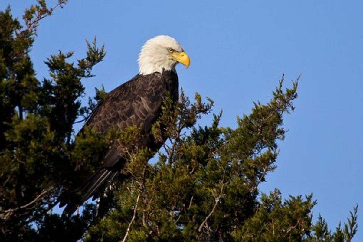 spirit-of-the-eagle