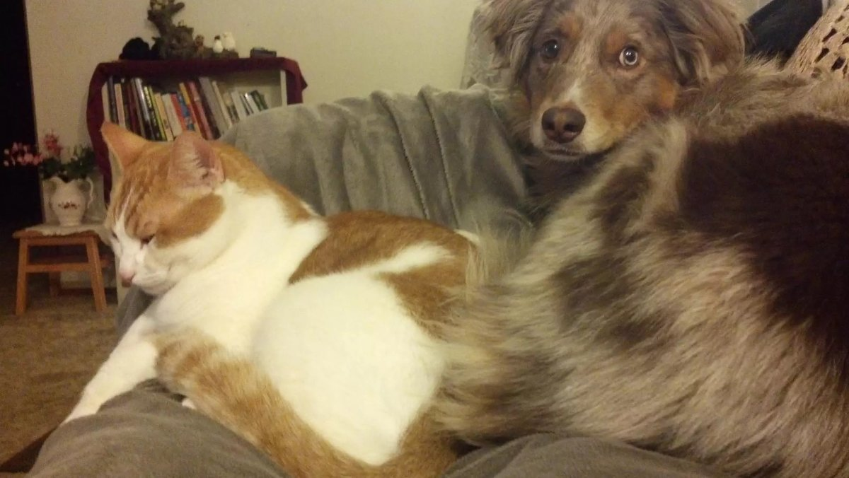 Happy Guard Dog and Cat
