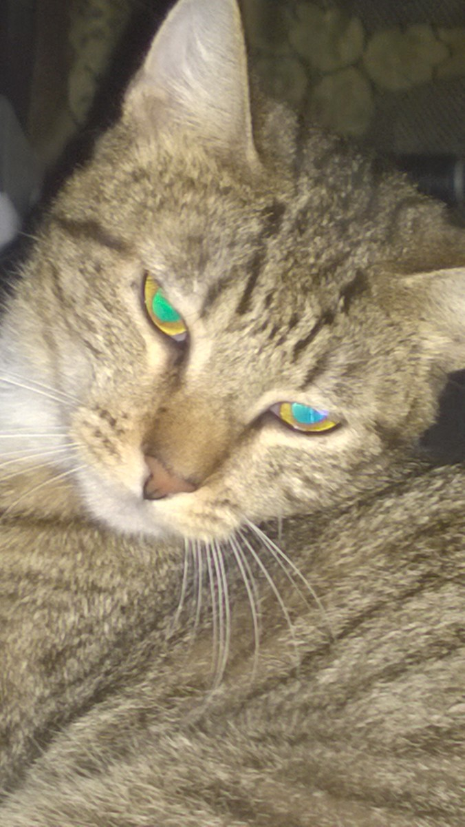 We told ourselves we were imagining things, that her eyes weren't beaming green lights from inside her head. We told ourselves that all cats' eyes do that.