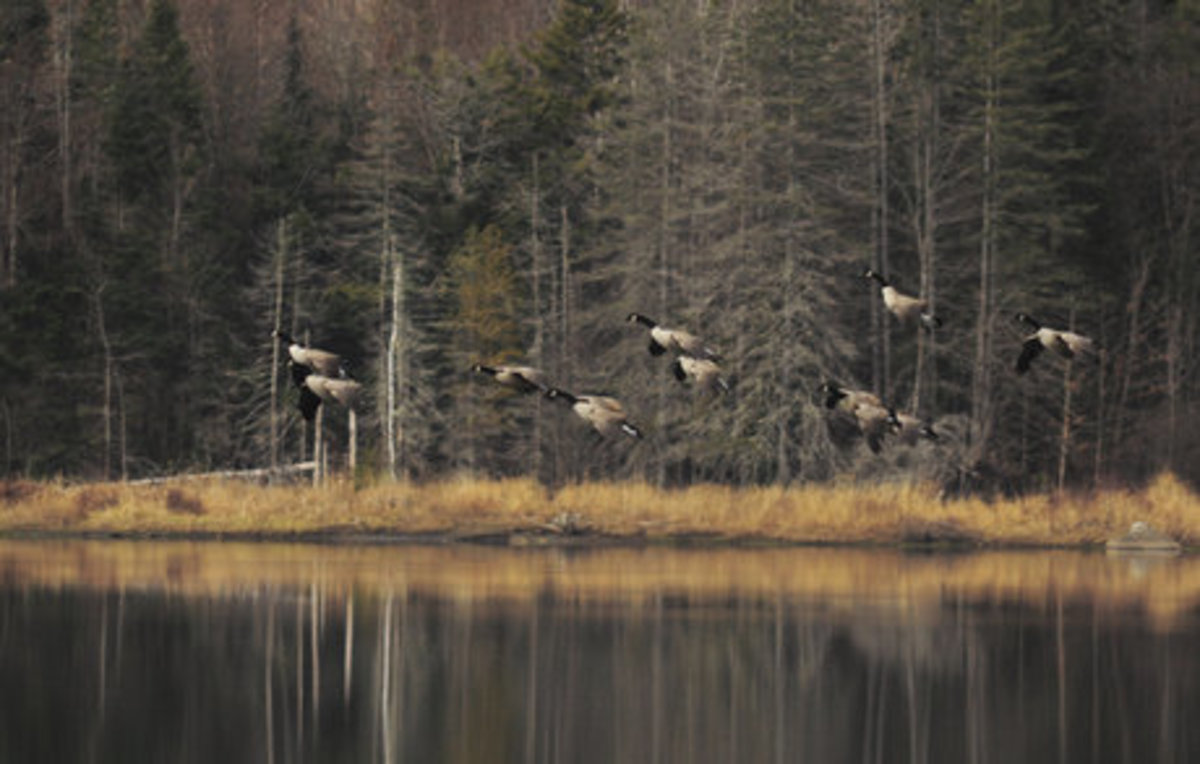 vermonts-stick-season
