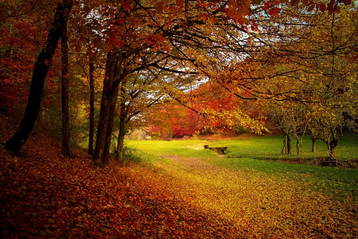 when-autumn-leaves