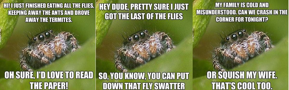 spiders-have-feelings
