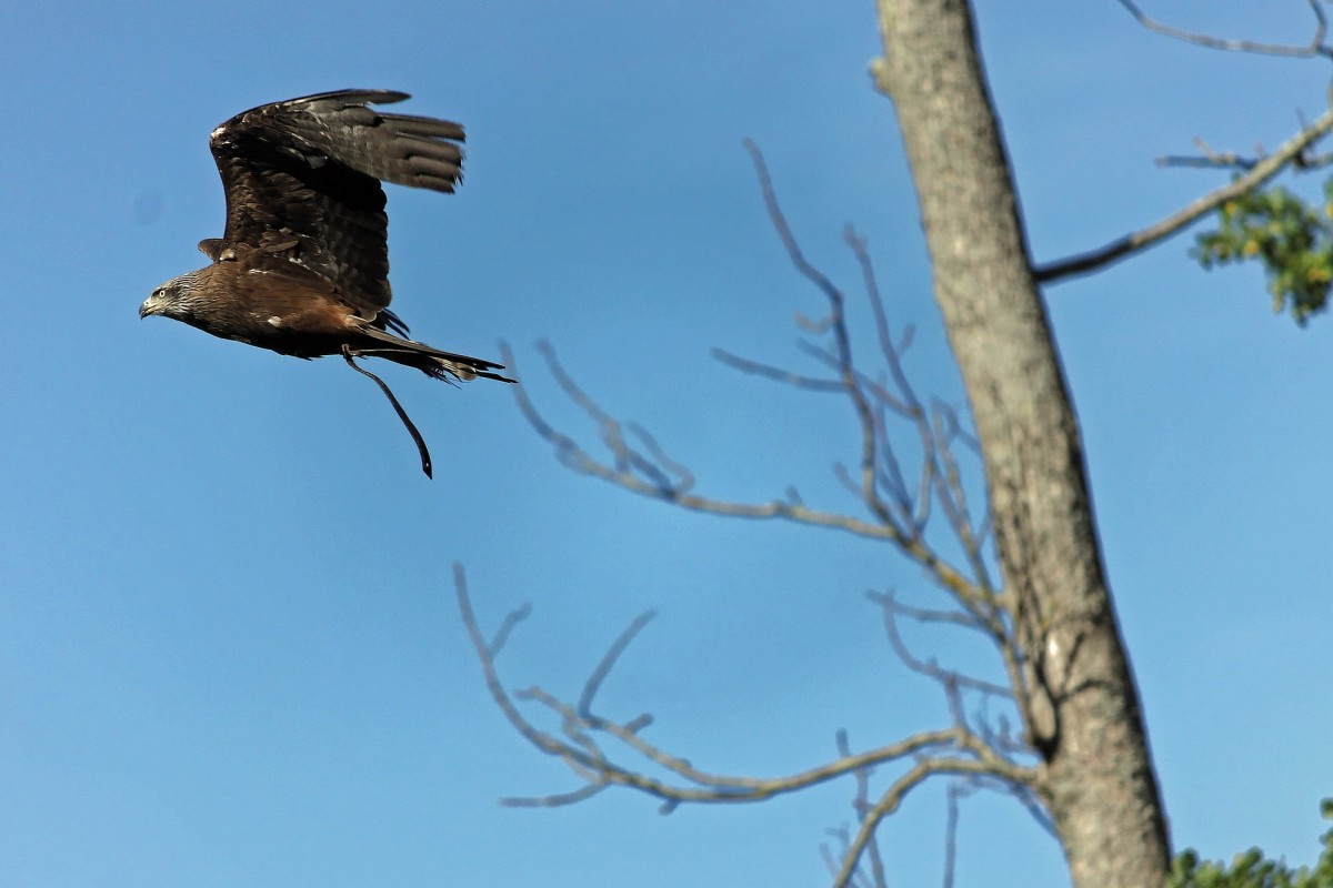 carrion-eaters were already circling above the treetops.