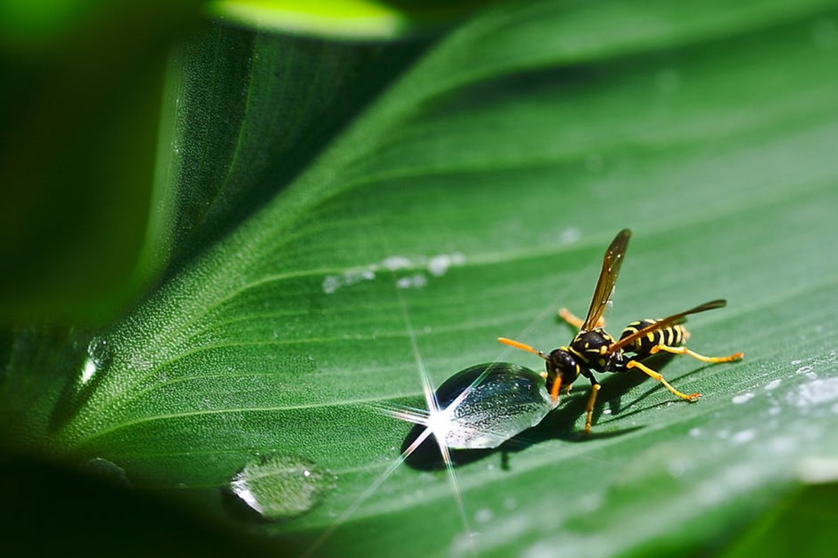 think-that-insects-have-easy-lives-think-again