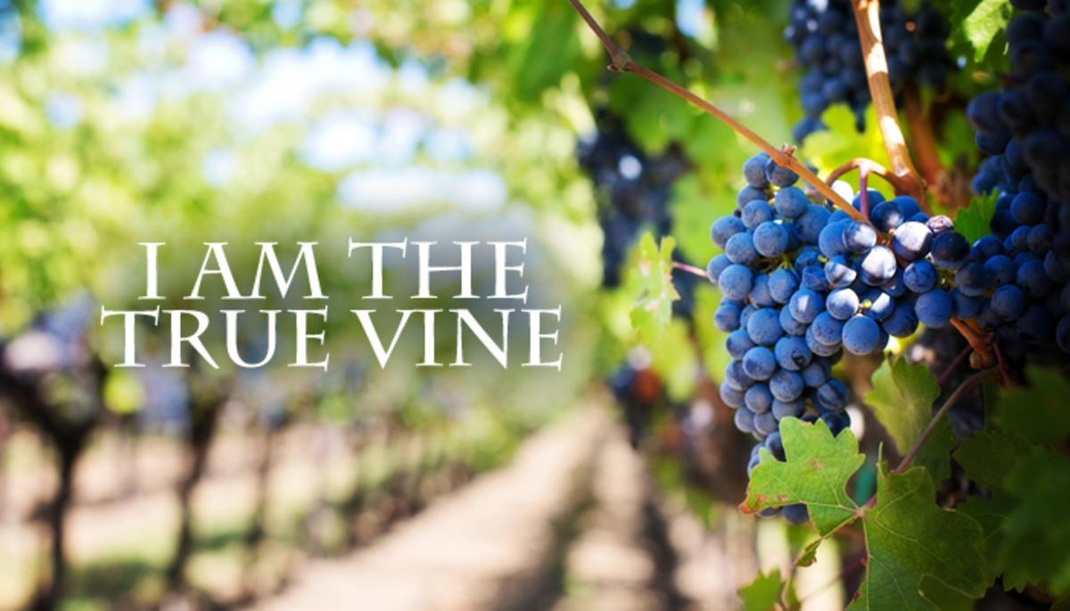 Jesus is the true vine.