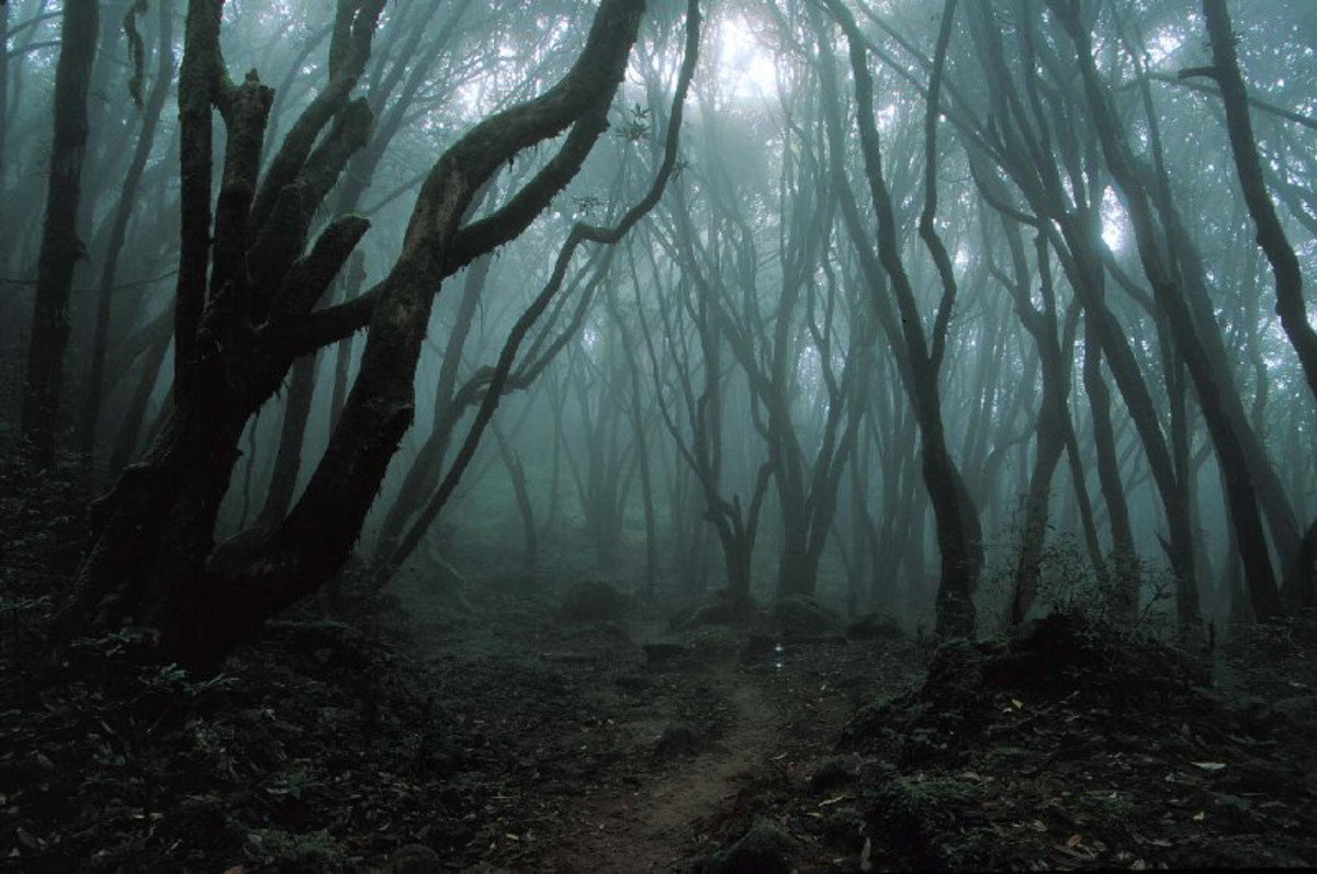 Hylophobia, an intense fear of the woods, is a common childhood phobia lasting into adulthood