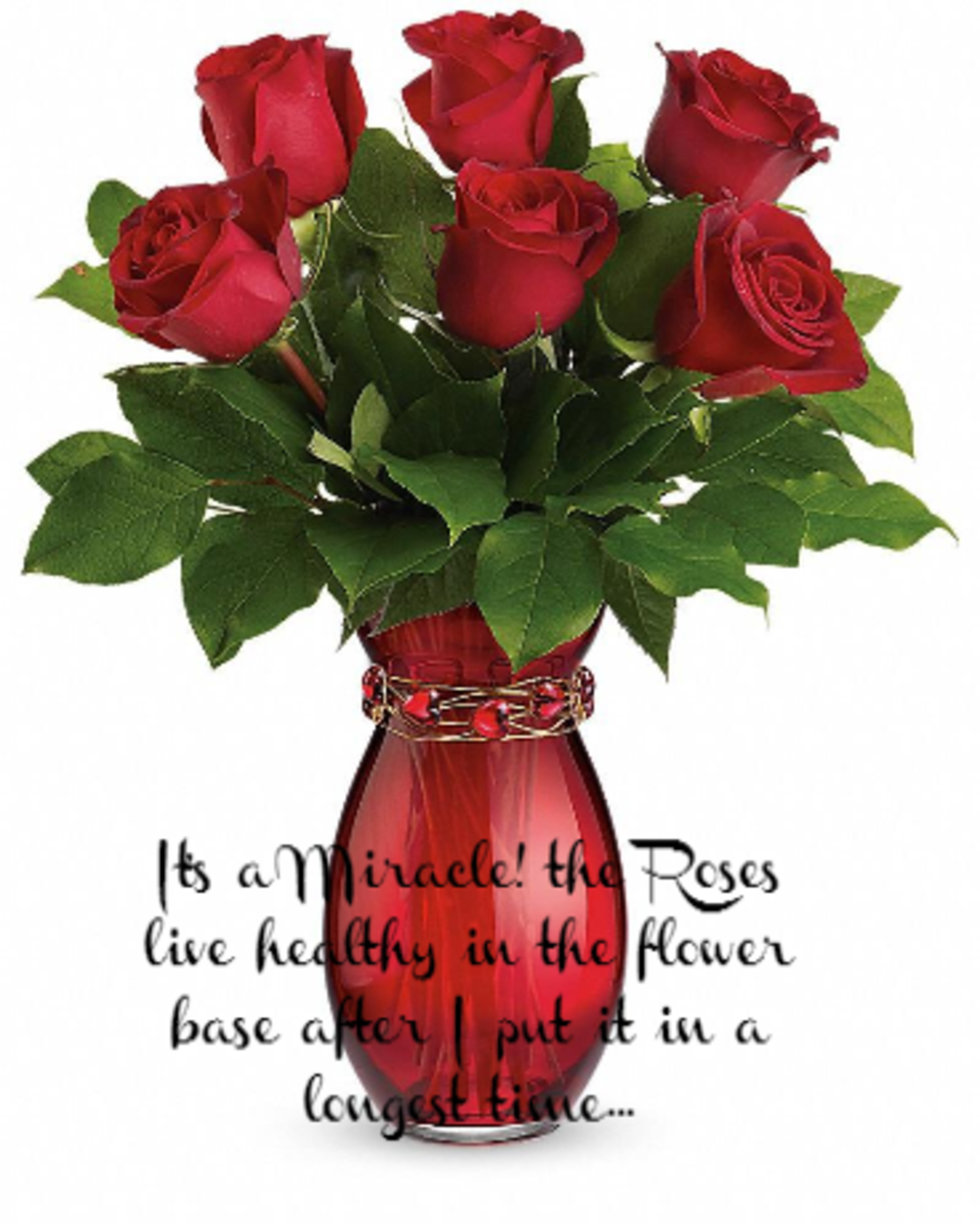 the-miracle-of-your-love-like-the-red-rose