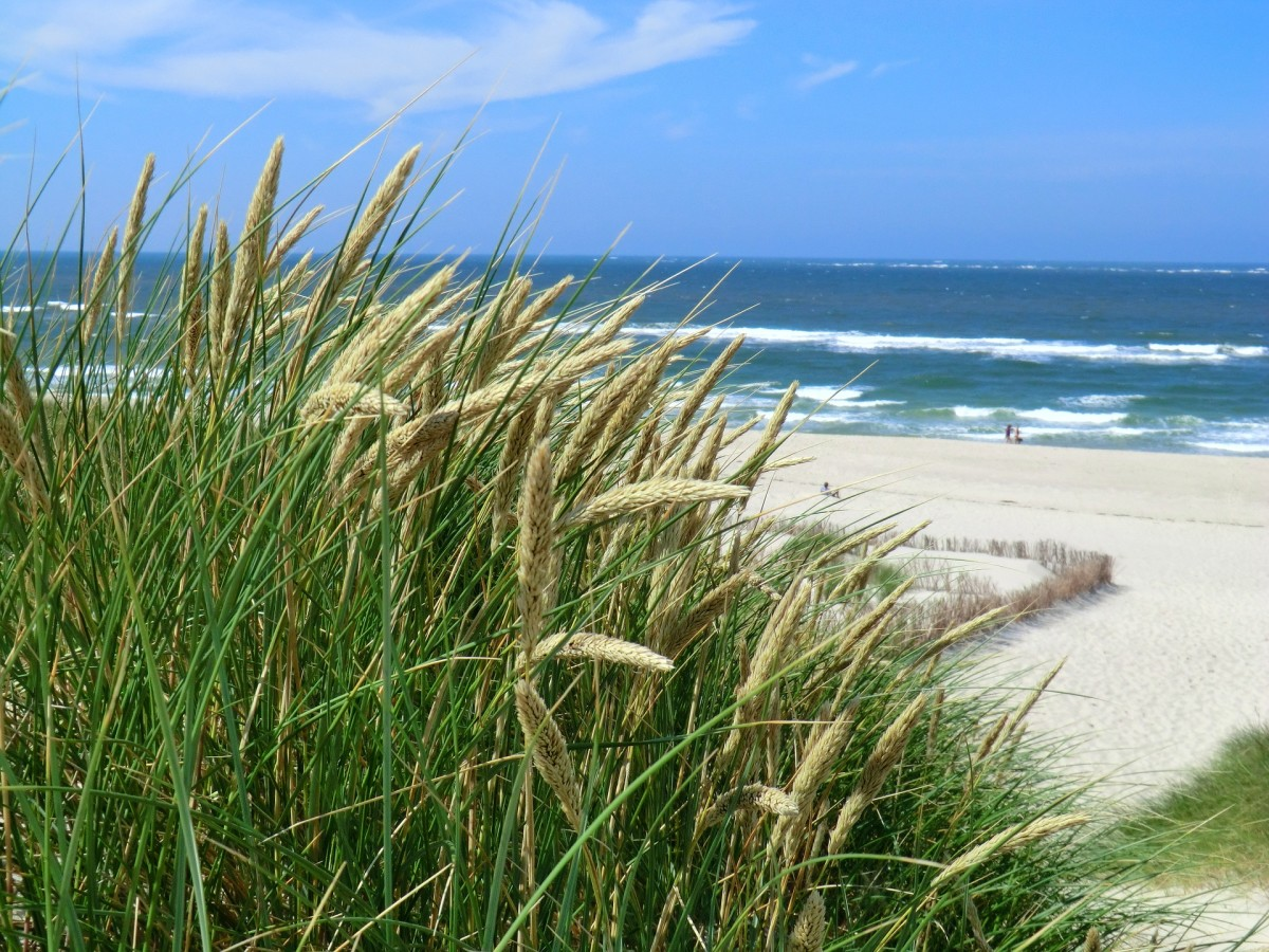 I sat on a sand dune one balmy summer day.