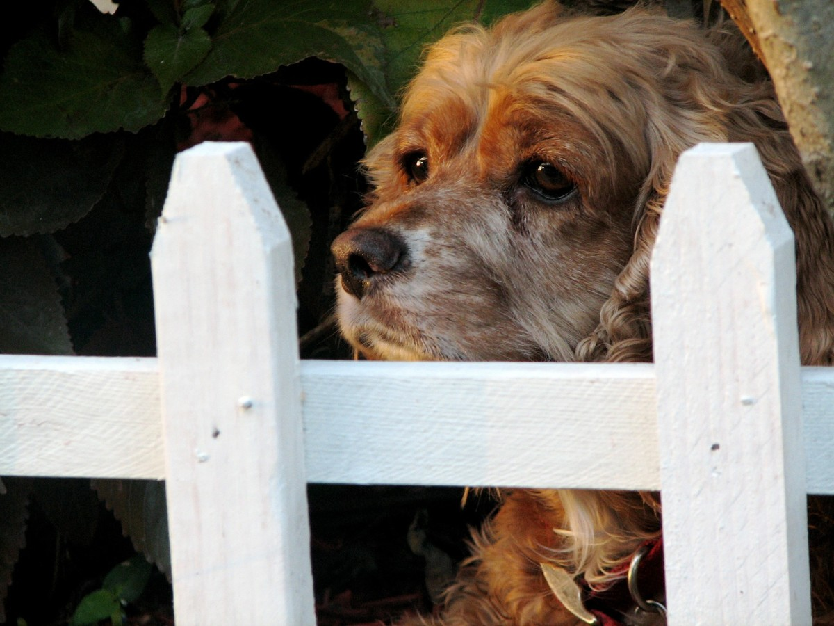 Barnabas met her at the fence with his face between the pickets.