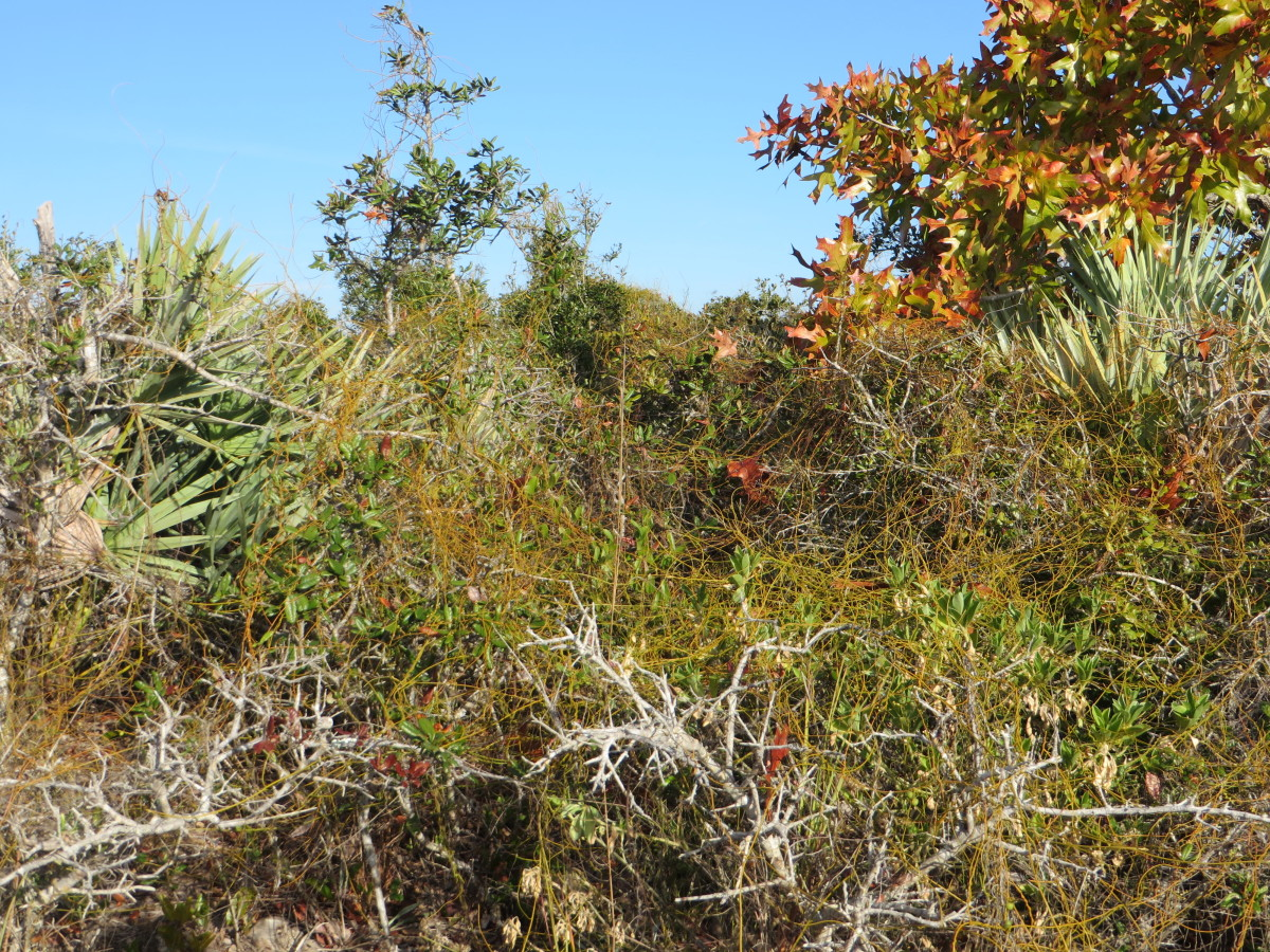 Scrub-Jay Trail