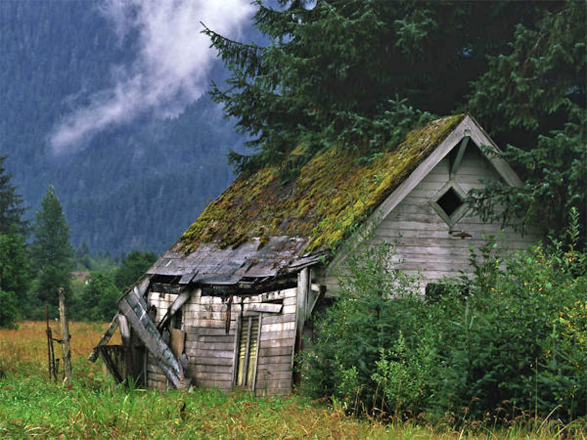 This old deserted cabin will become a lifeline for Jenny!