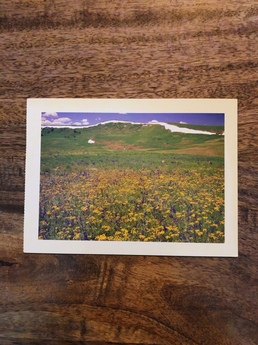 4. Moab, Utah. One of the first postcards I received from my husband before we met! The image of the postcard was Wildflower meadows in Manti-La Sal National Forest, Utah.