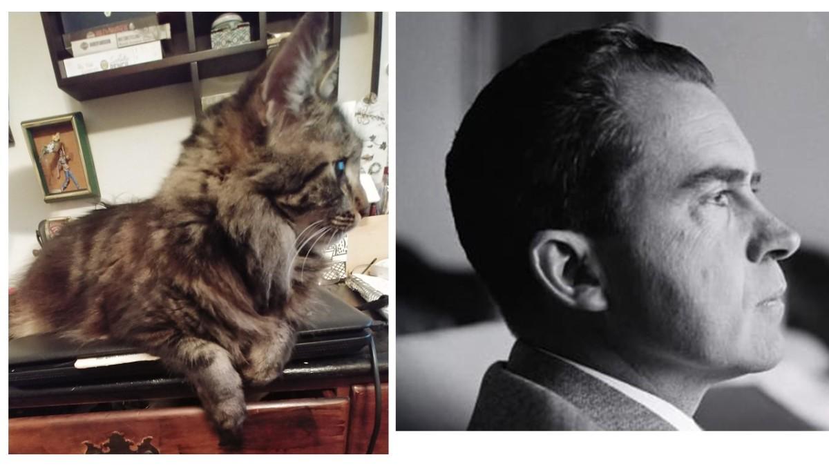 a-cat-named-trix-is-the-reincarnation-of-richard-nixon