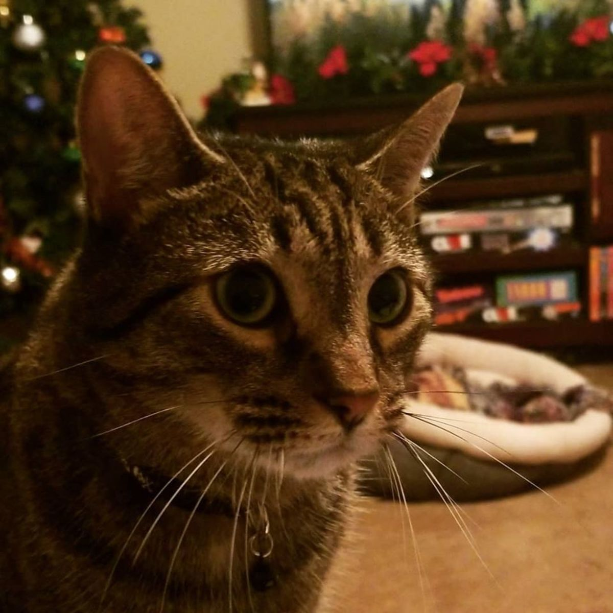 merry-christmas-oliver