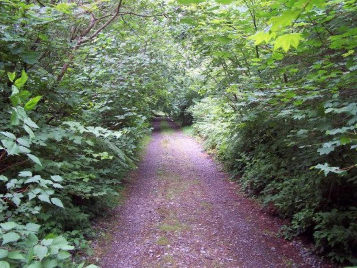 Meandering path lends itself to wandering thoughts