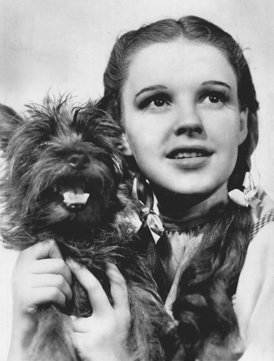The Wizard of Oz is about Dorothy and her little dog Toto.